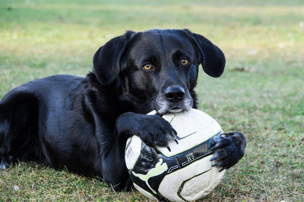 dog, ball, sweet