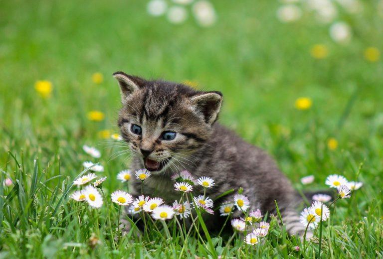 kitty, cat, kitten