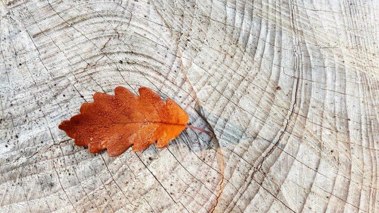 autumn, fall foliage, oak leaf