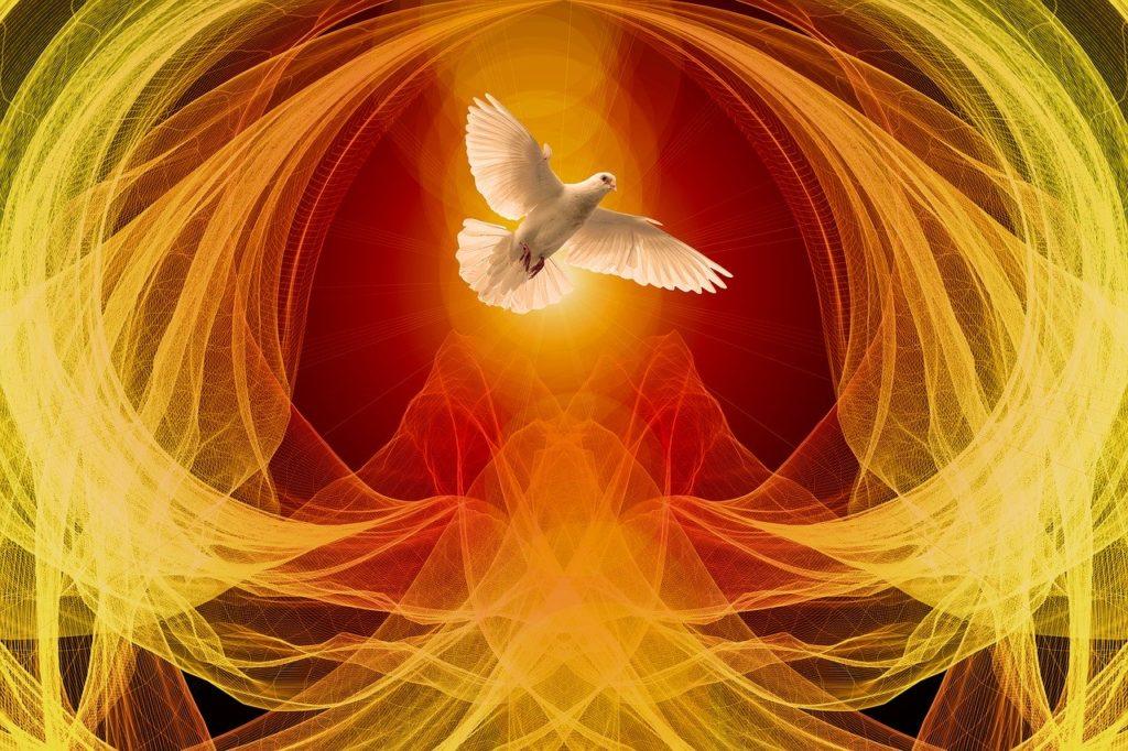 dove, wave, particles