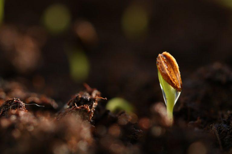 seed, germinate, spring